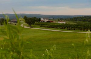 winerylandscape